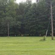 deer along VA trail